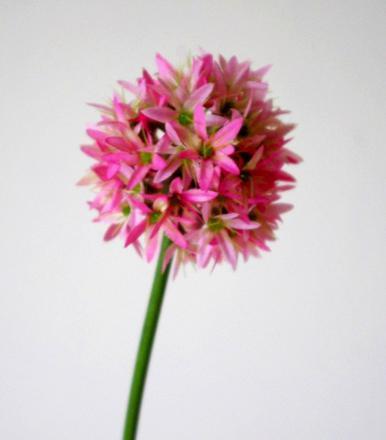 fausse fleur