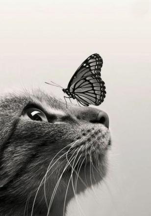 chat papillon