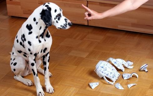 chien destructeur
