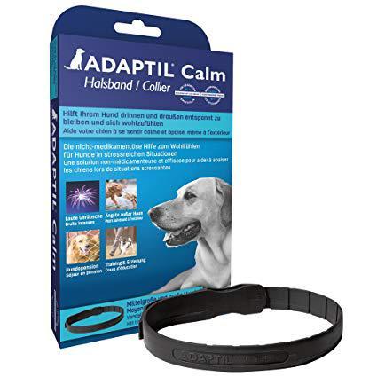collier hormone chien