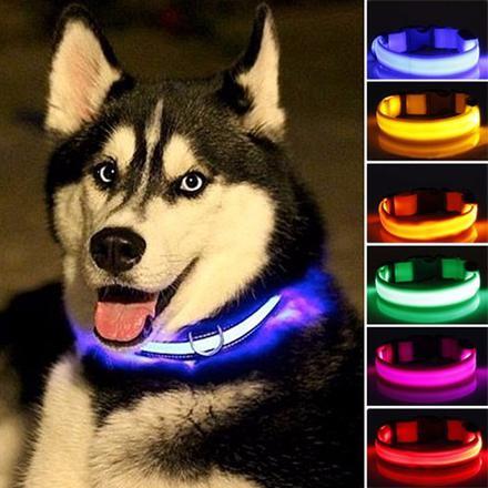 collier lumineux pour chien