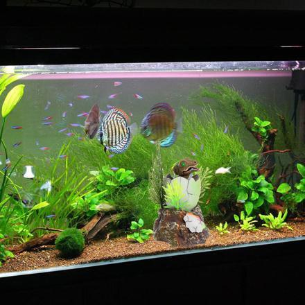 decoration aquarium