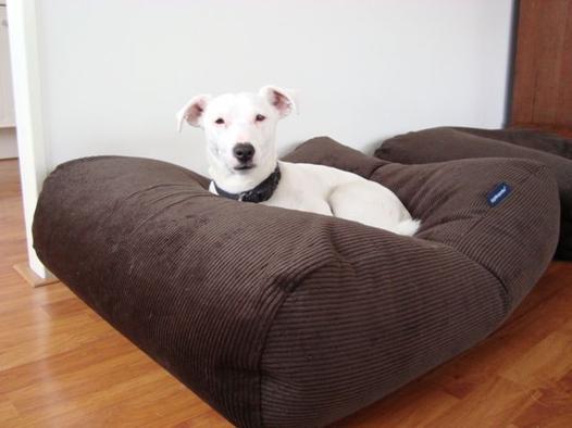 grand coussin pour chien