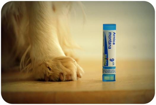 homeopathie pour chien