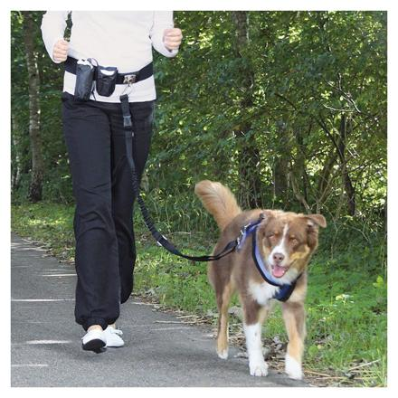 jogging chien