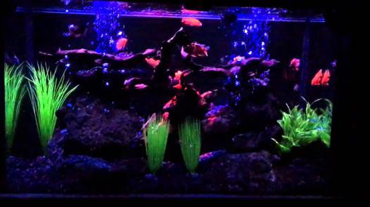 neon aquarium