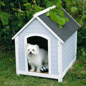 niche petit chien