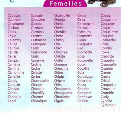 nom chat femelle