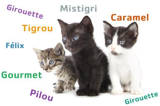 nom de chat original