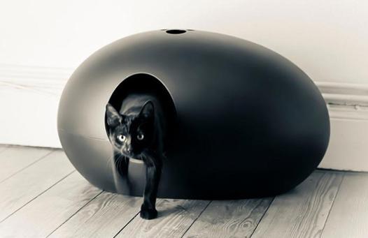 petite litiere chat