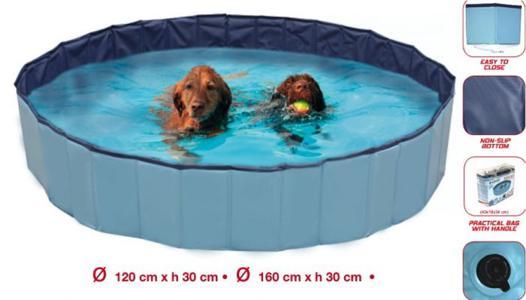 piscine pour chien