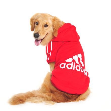 pull pour chien