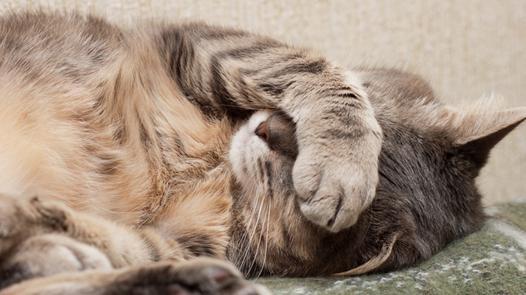rhume chat