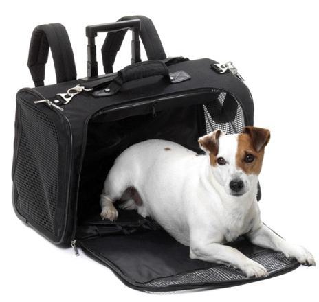 sac voyage chien