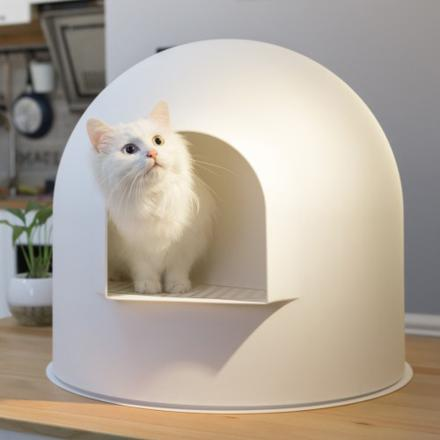 toilette chat